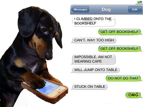 We text you with updates on your pet