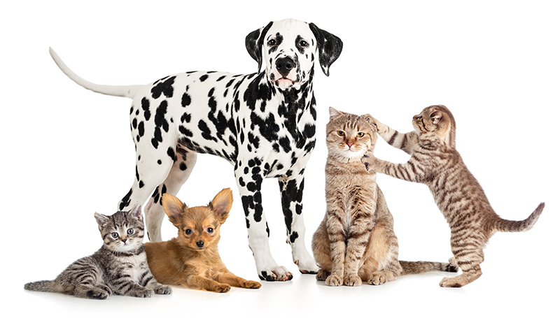 Who are some pet sitters in Allen, Texas? Allenpetcare.com are the professionals.