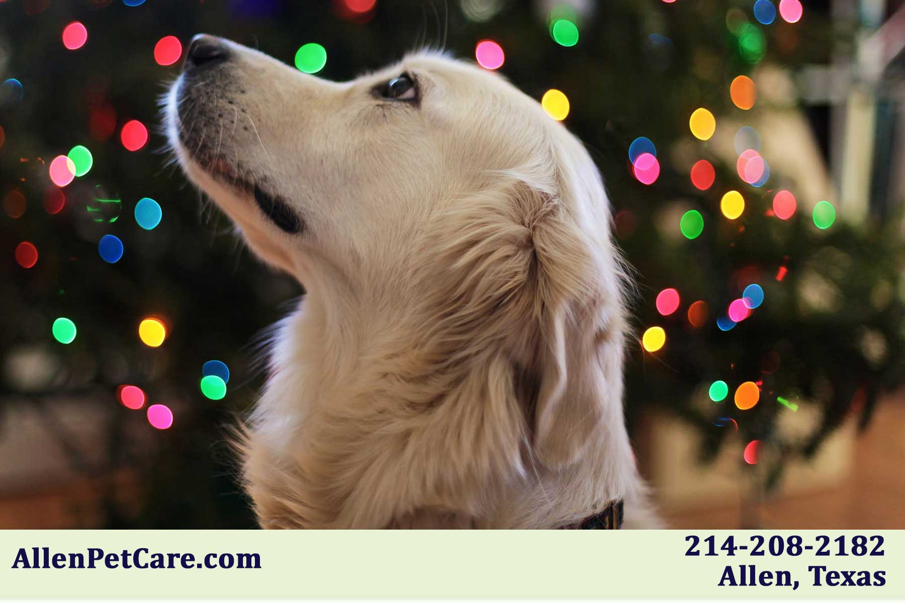 holiday pet sitters in and around McKinney Texas