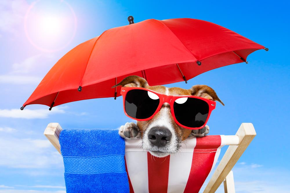 protecting pets from the sun in North Texas. Personal Pet and Home Care